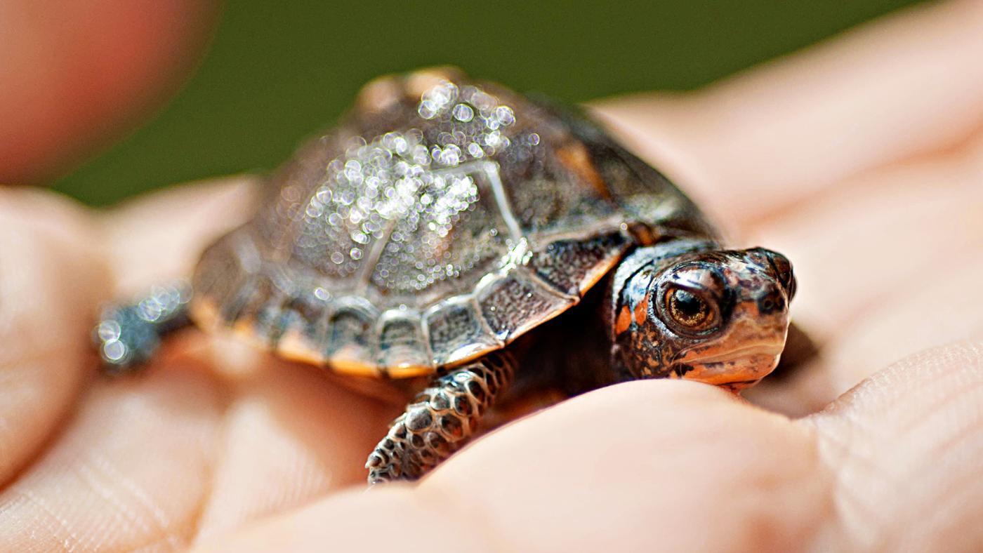 symbolic-meaning-turtle