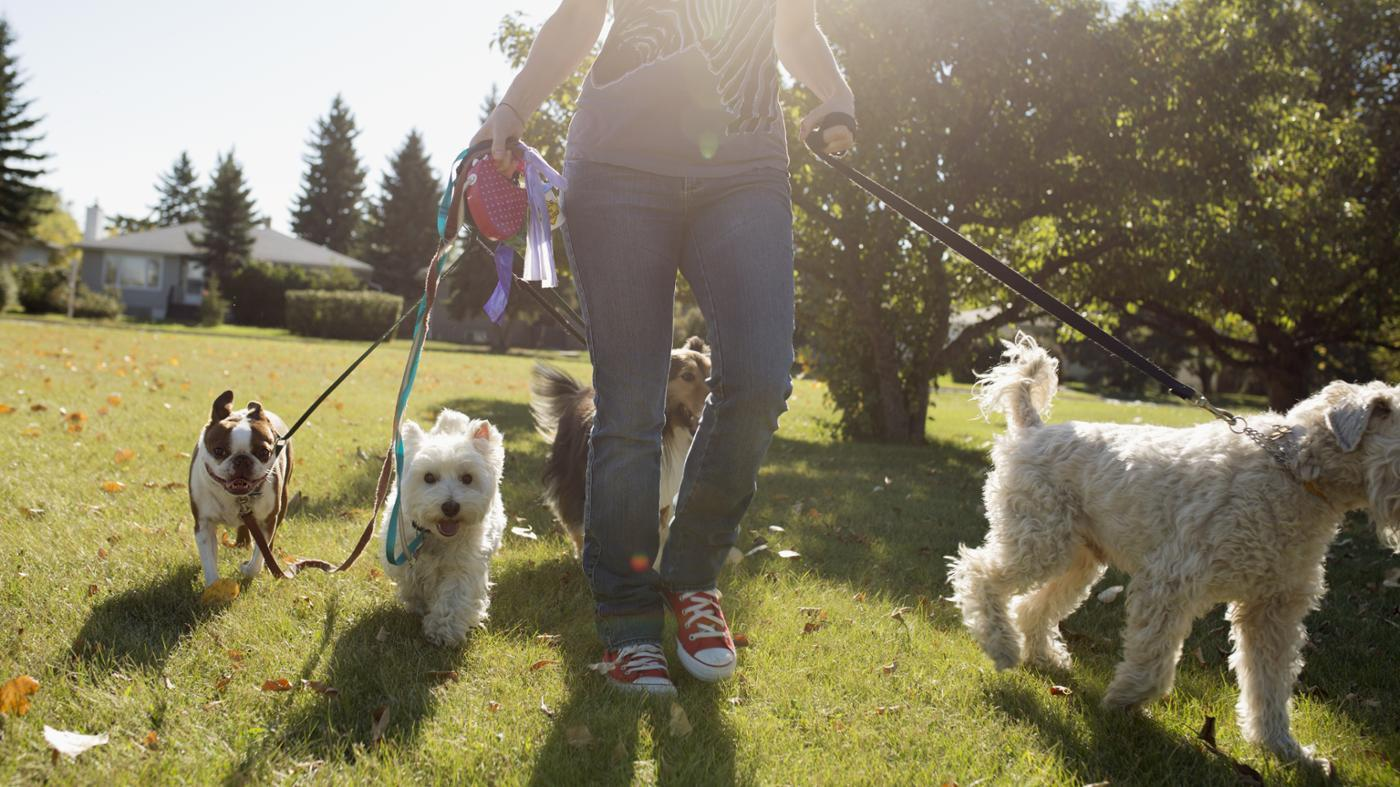 tennessee-leash-law