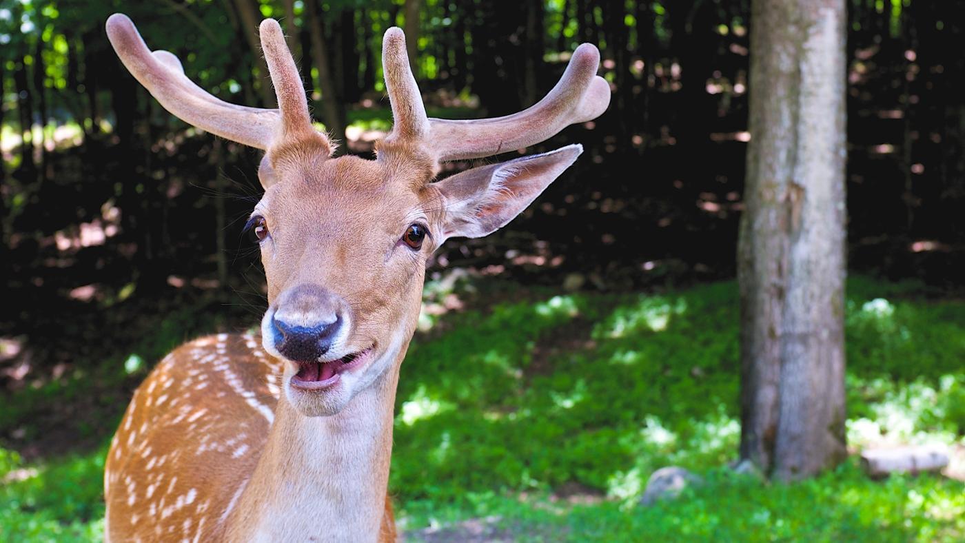 types-foods-deer-eat