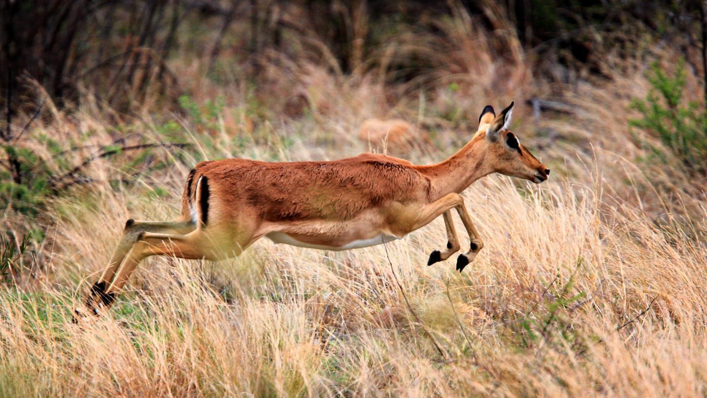 types-african-antelope