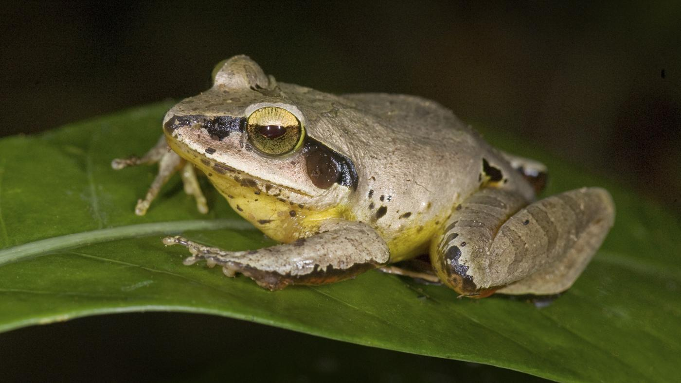 symbolic-meaning-seeing-frog