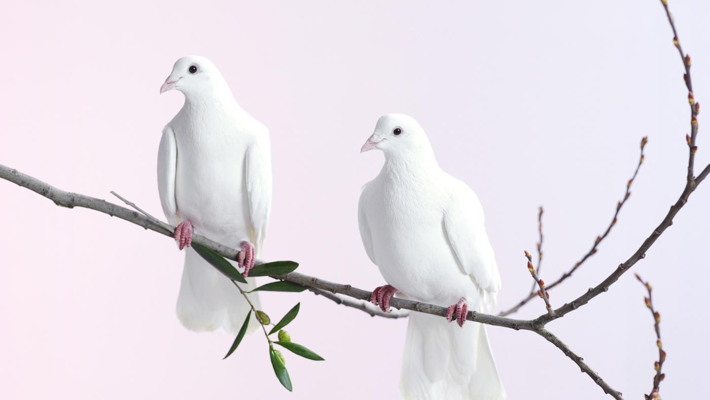 dove-symbolize