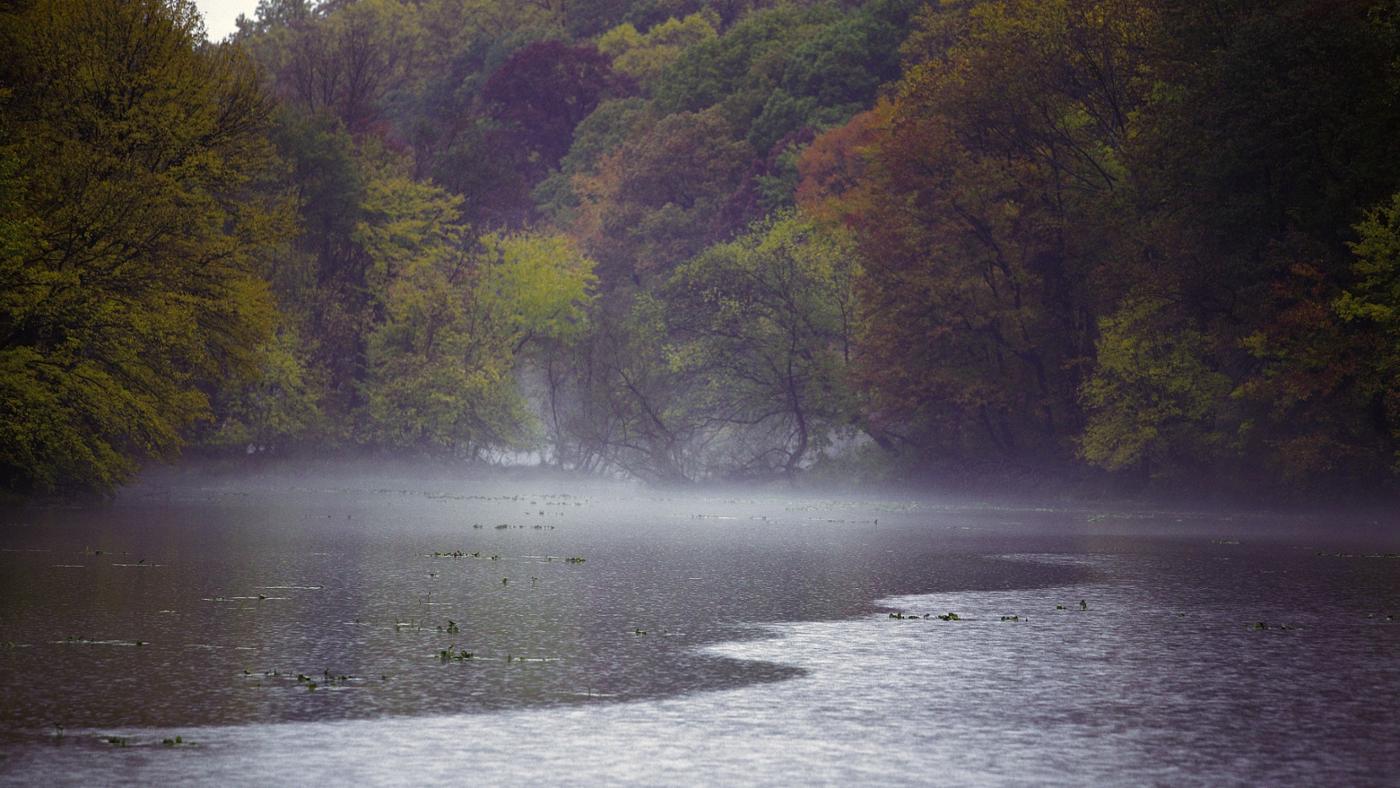 effect-acid-rain-environment