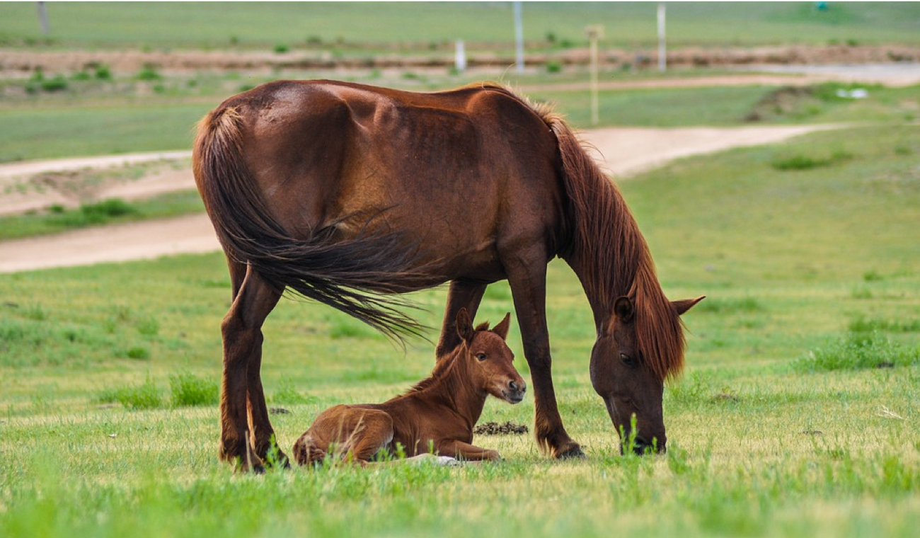 What Is A Young Horse Called