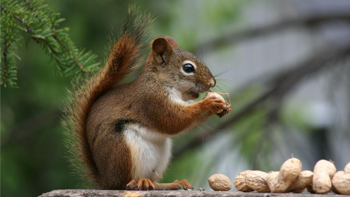 kind-nuts-squirrels-eat
