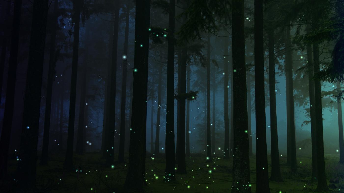 fireflies-come-out