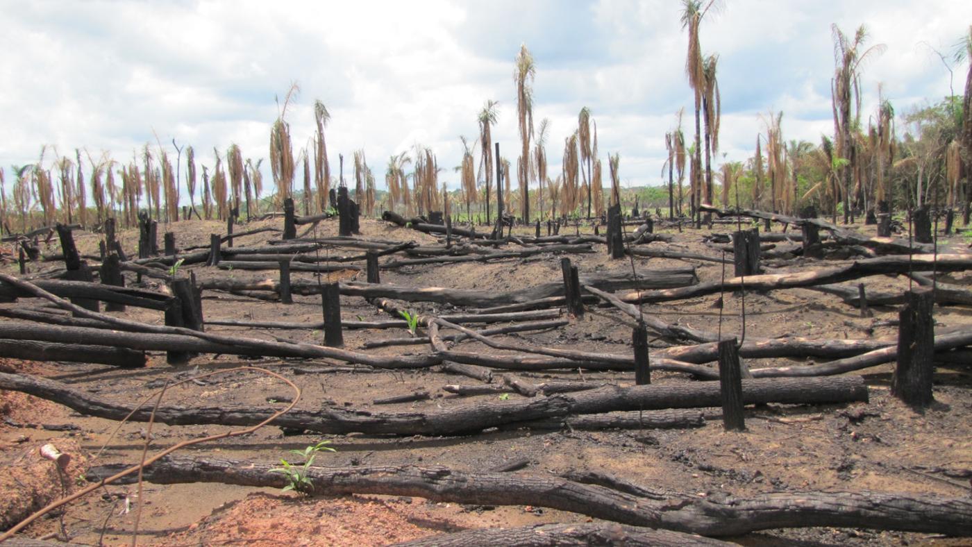 deforestation-bad-thing