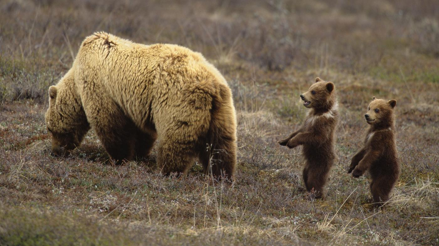 young-bear-called