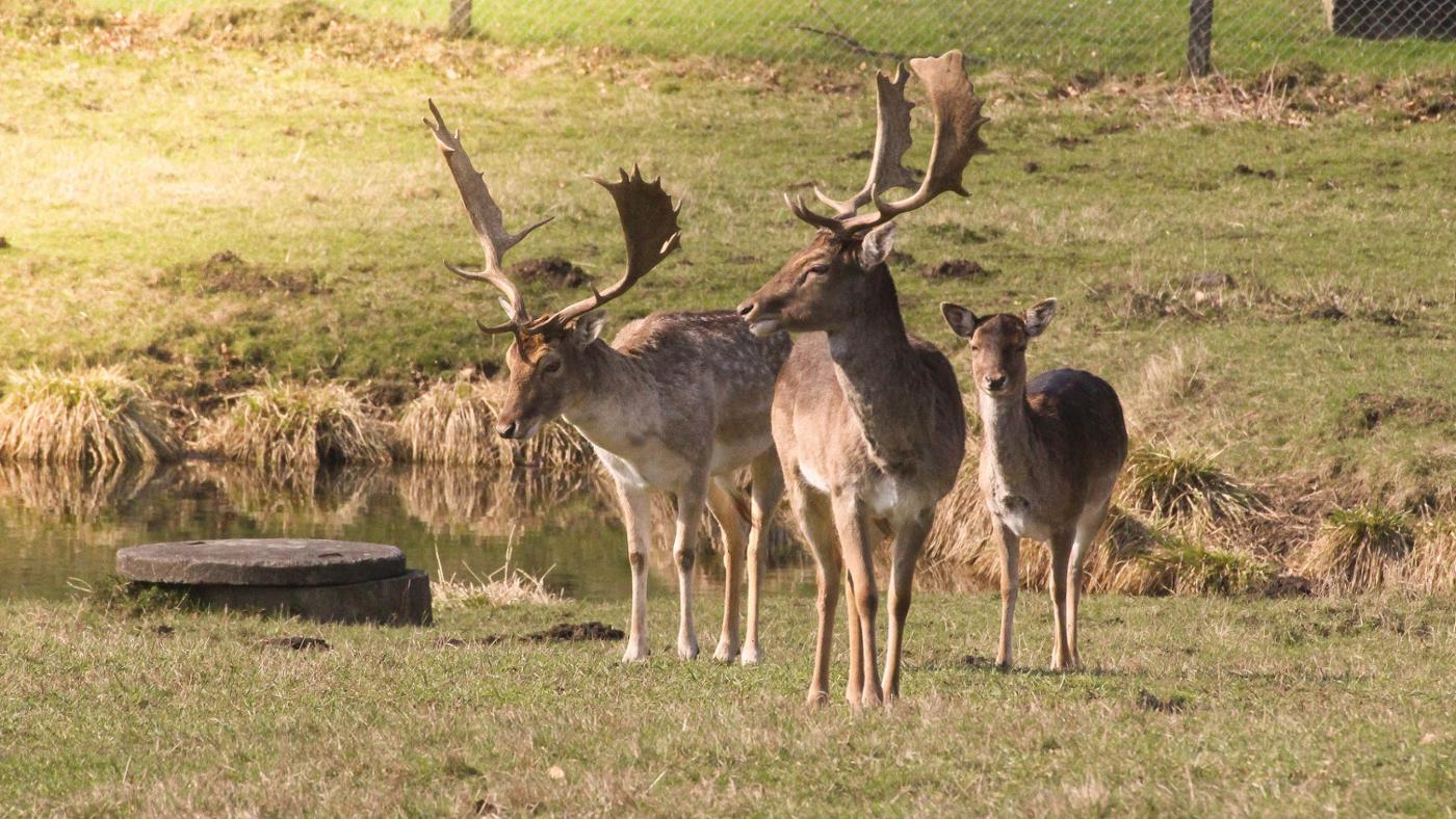 What Are Some Adaptations That Deer Have?