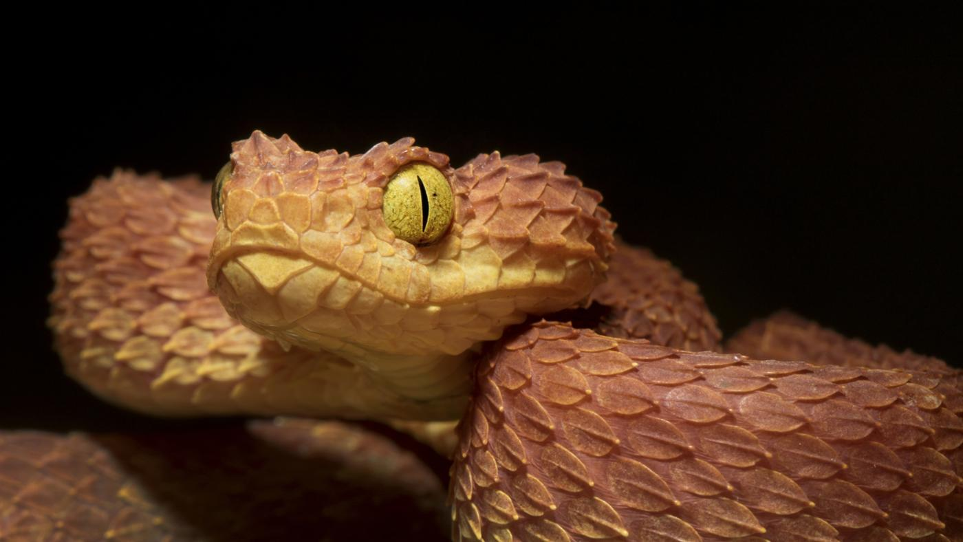 What Are Africa's Most Deadly Snakes?