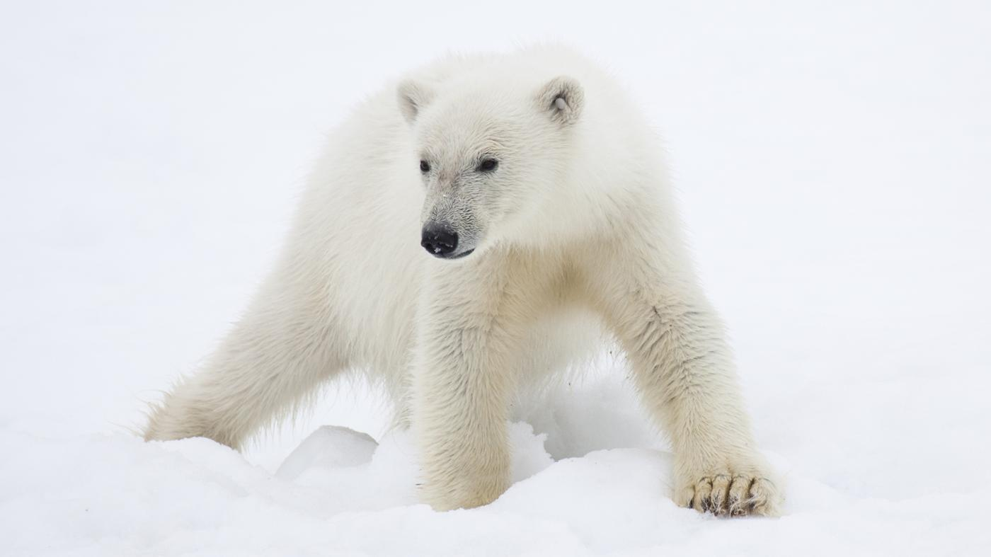 What Animals Are Found in the Polar Region?