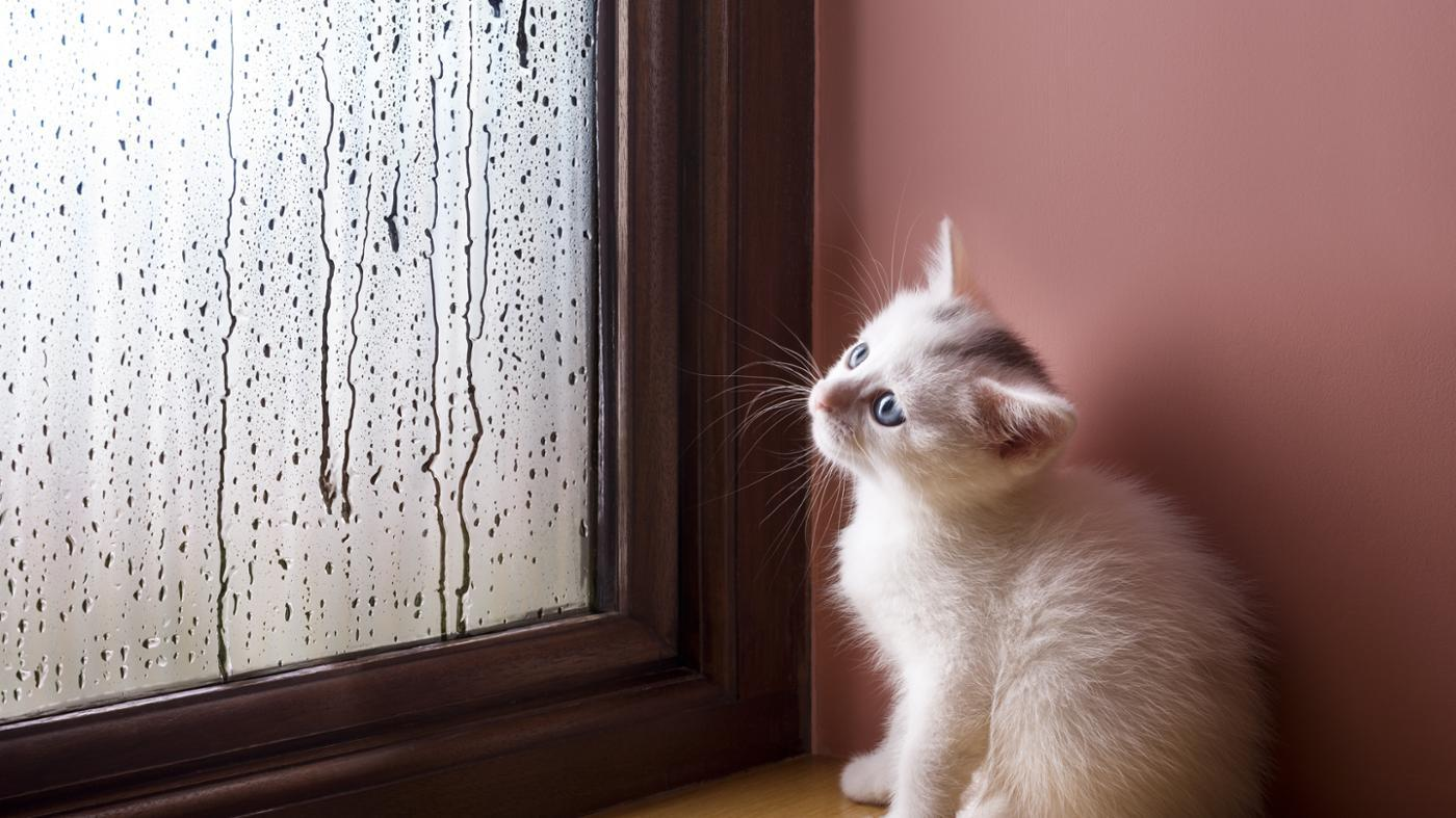 How Do Animals React to Weather Changes?