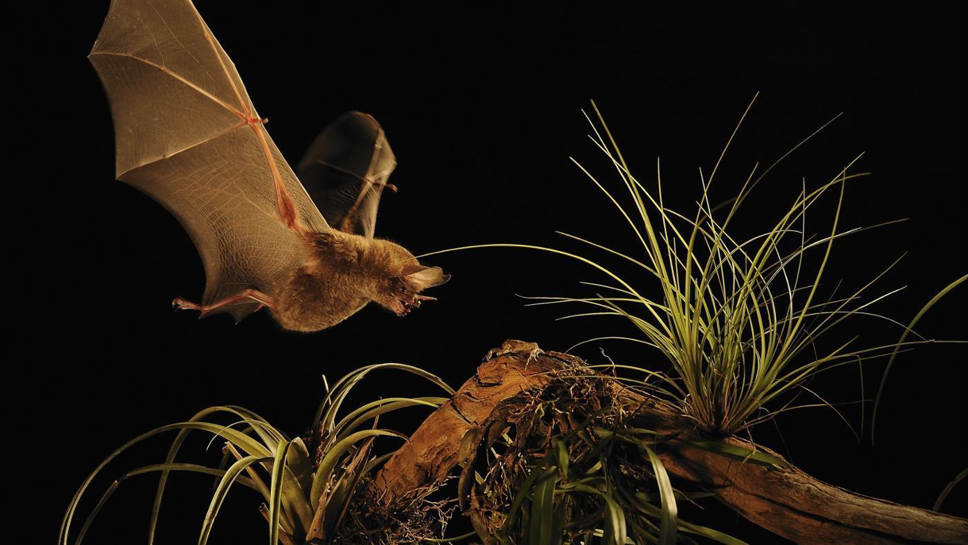 Are Bats Omnivores?