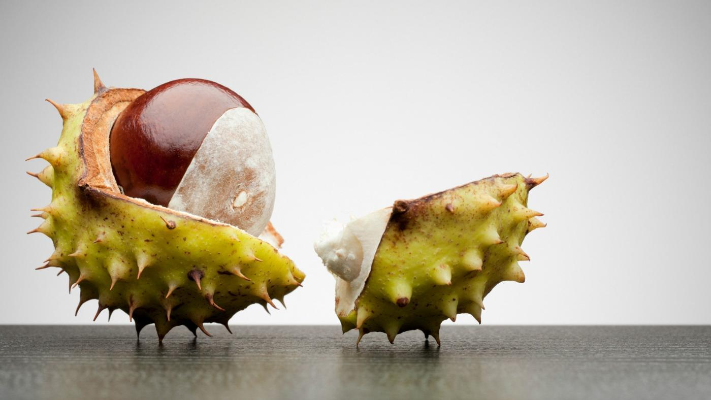 Are Horse Chestnuts Poisonous?