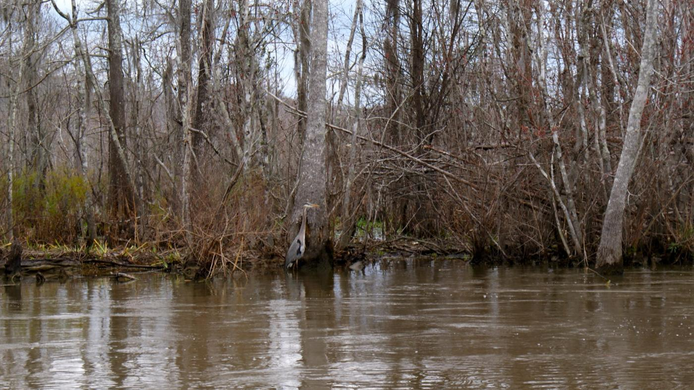 What Is the Average Temperature of a Swamp?