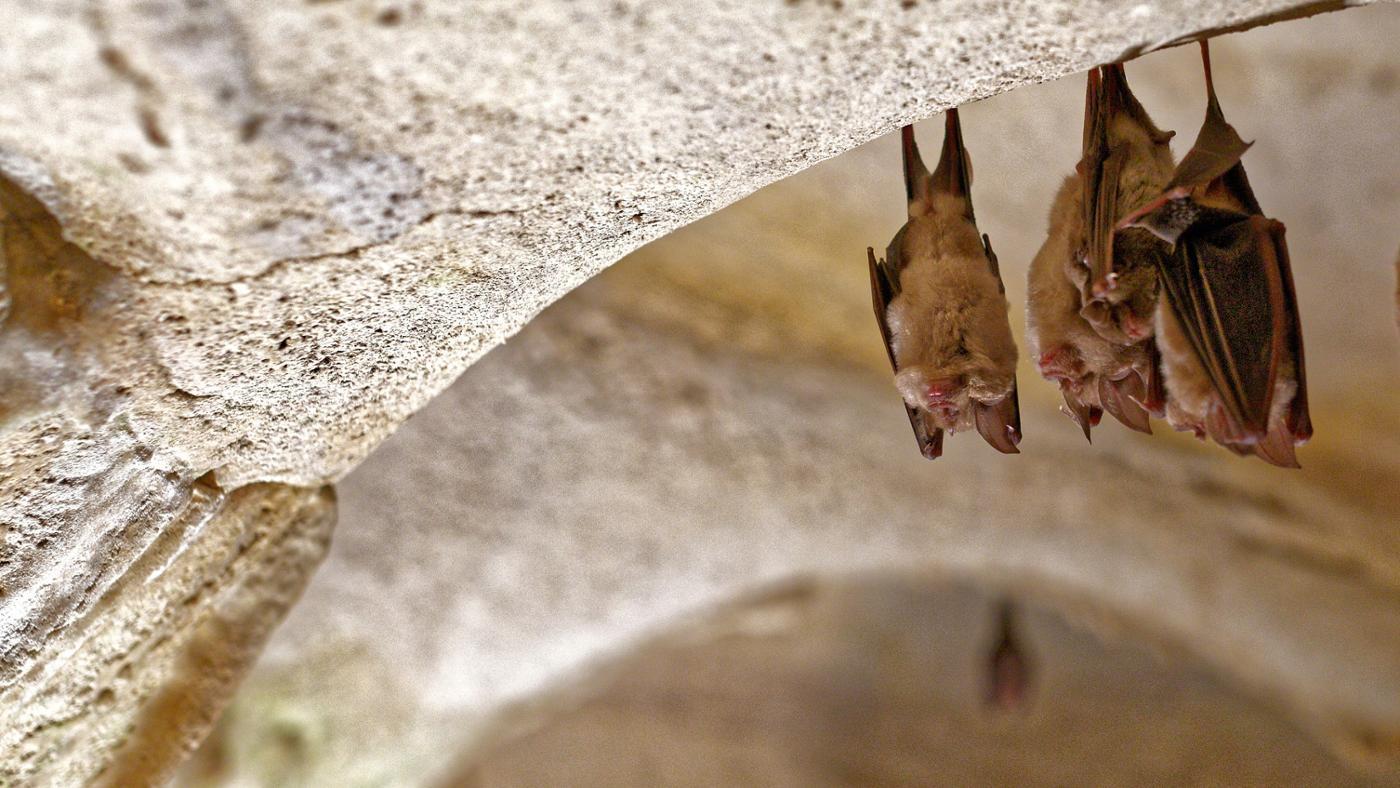 What Is a Bat's Habitat?