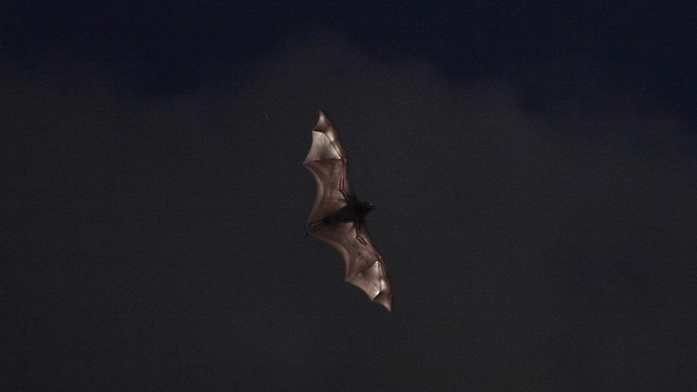 How Do Bats Find Their Food?