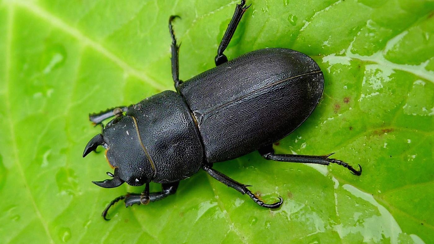 Where Do Beetles Live?