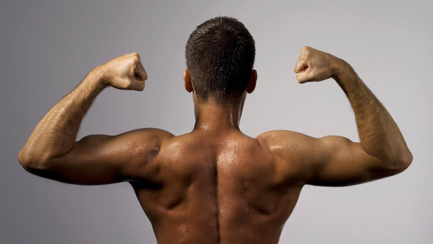 Why Are the Biceps Classified As a Skeletal Muscle?