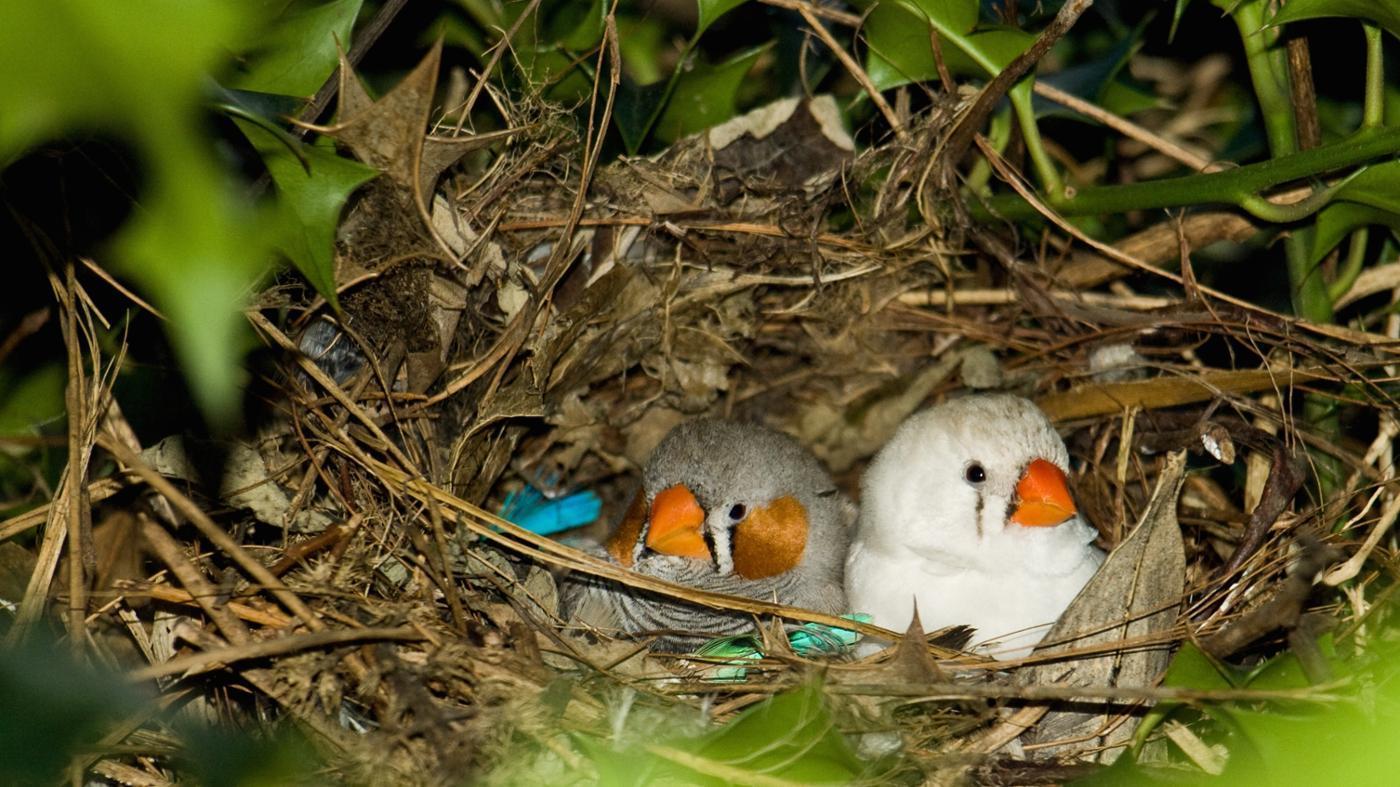 Why Do Birds Build Nests?