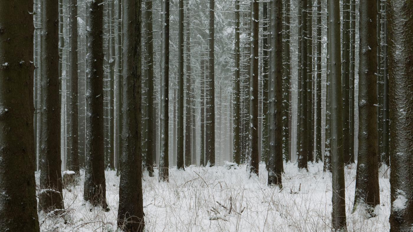 Why Is the Black Forest Called the Black Forest?