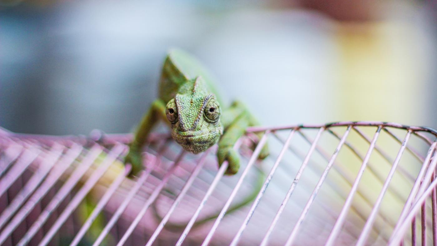 How Do You Build a Reptile Cage?