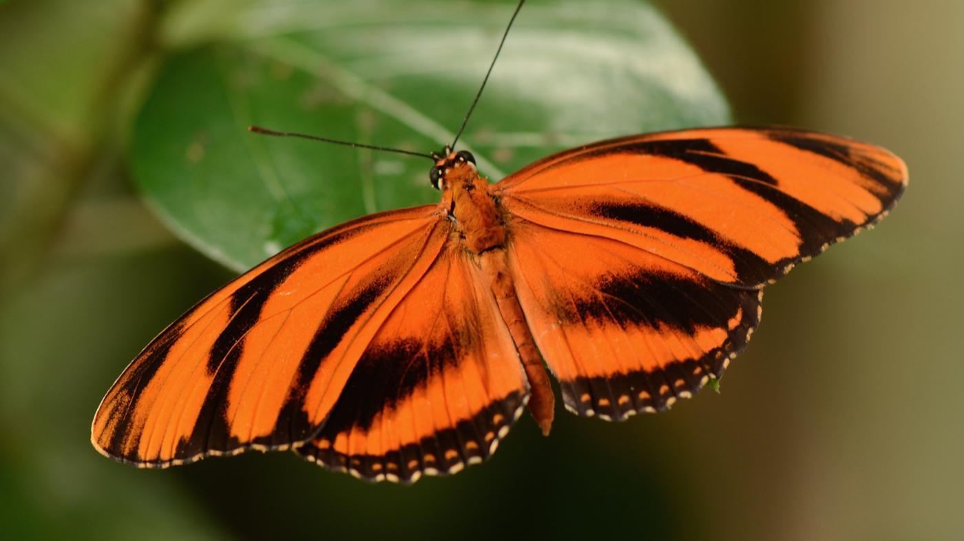 Is a Butterfly an Invertebrate?