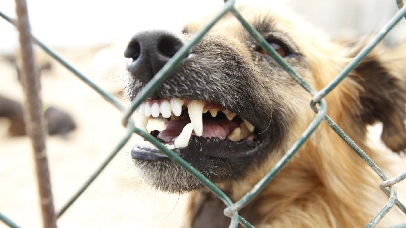 What Is the California Dog Bite Law?