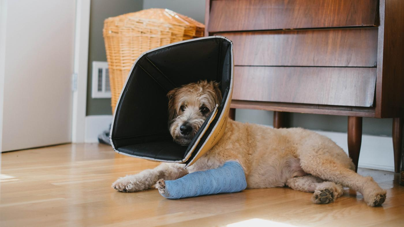 How Can I Help My Dog's Broken Leg to Heal?