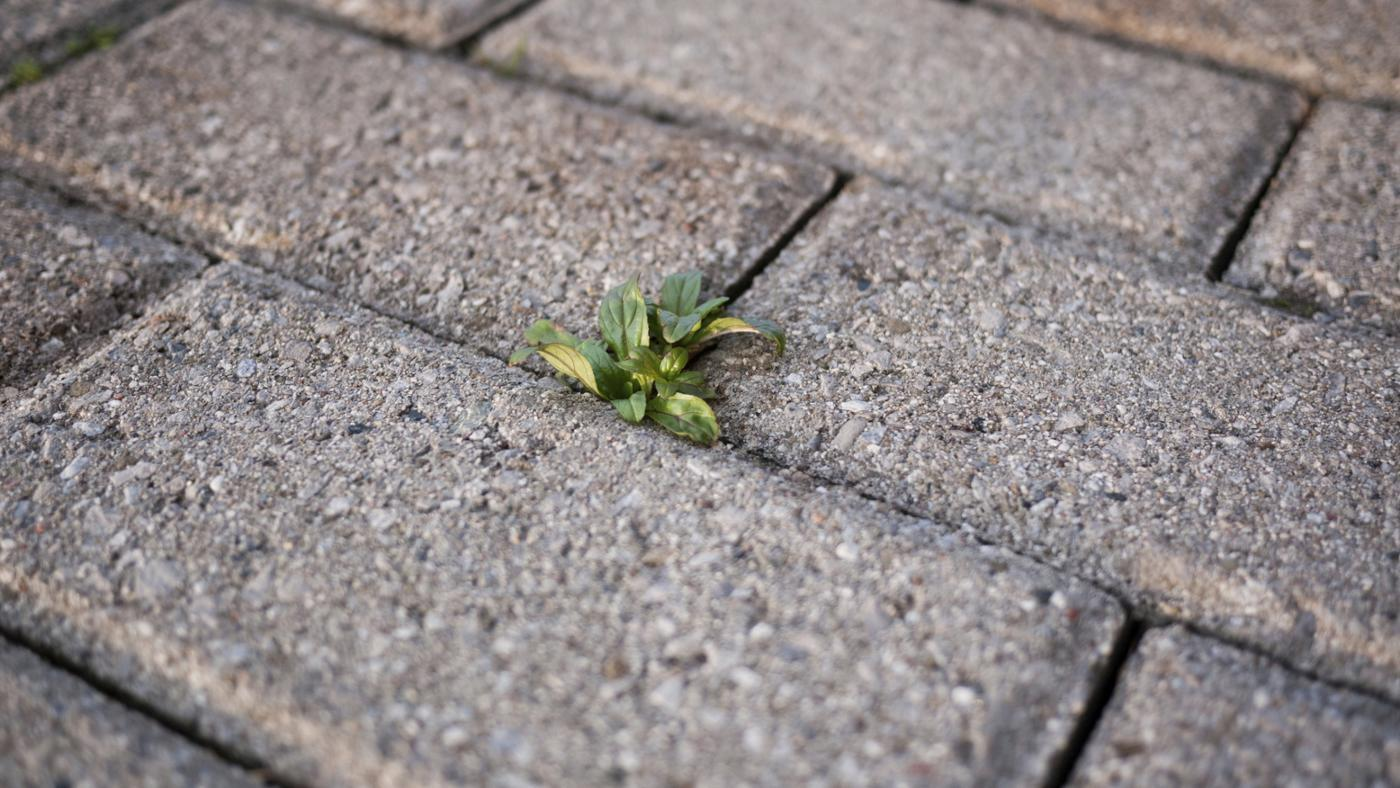 How Can I Kill Weeds in My Driveway?