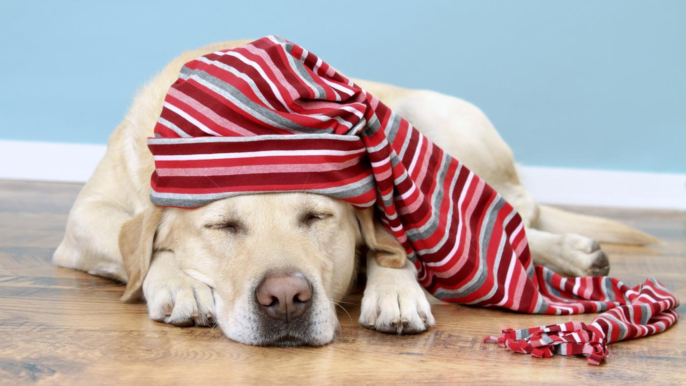 Can You Leave a Dog Alone Overnight?