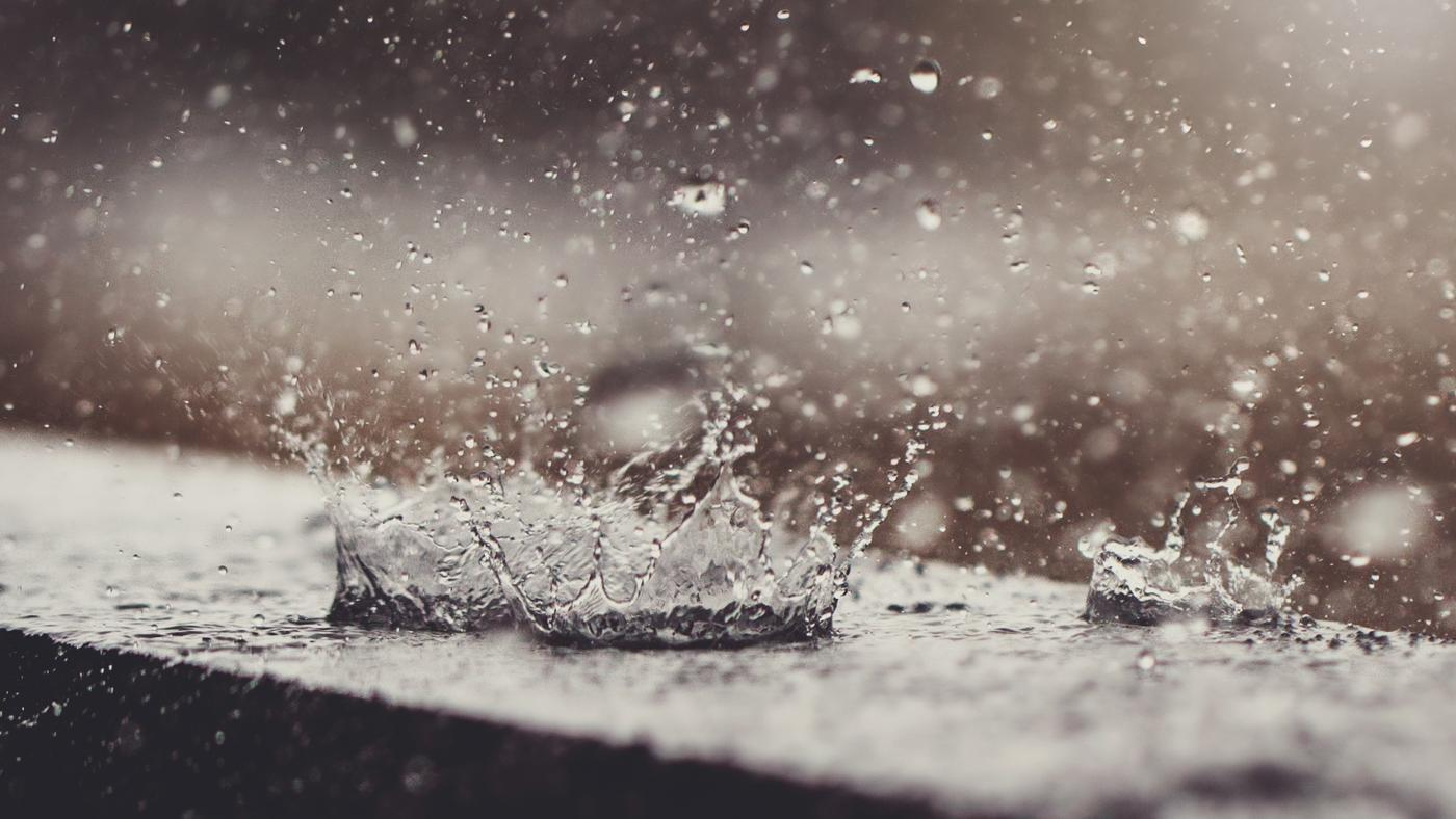 Where Can You Find Local Daily Rainfall Totals?
