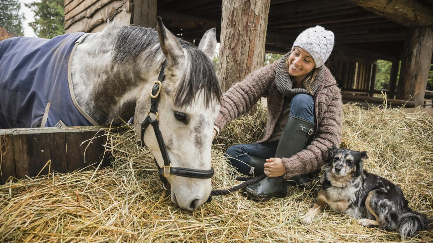 Where Can You Find Plans for Building a Horse Hay Feeder?