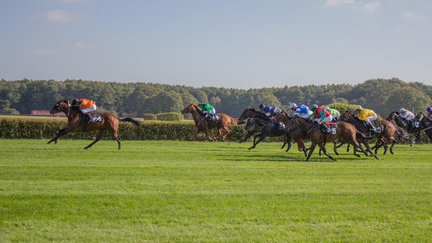 Where Can Results for Horse Races Be Found on the Internet?