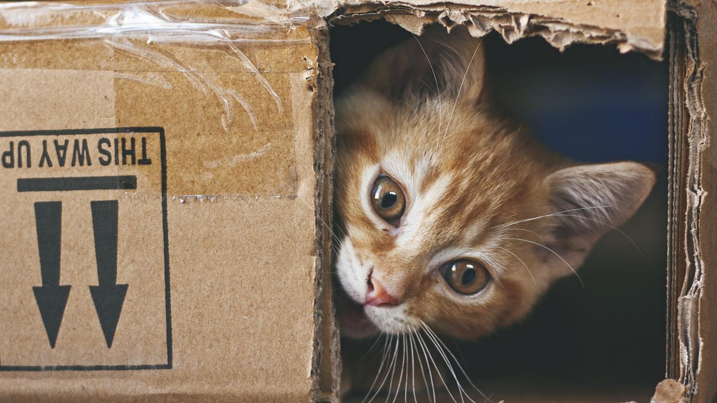 How Do Cat Years Correlate to Human Years?