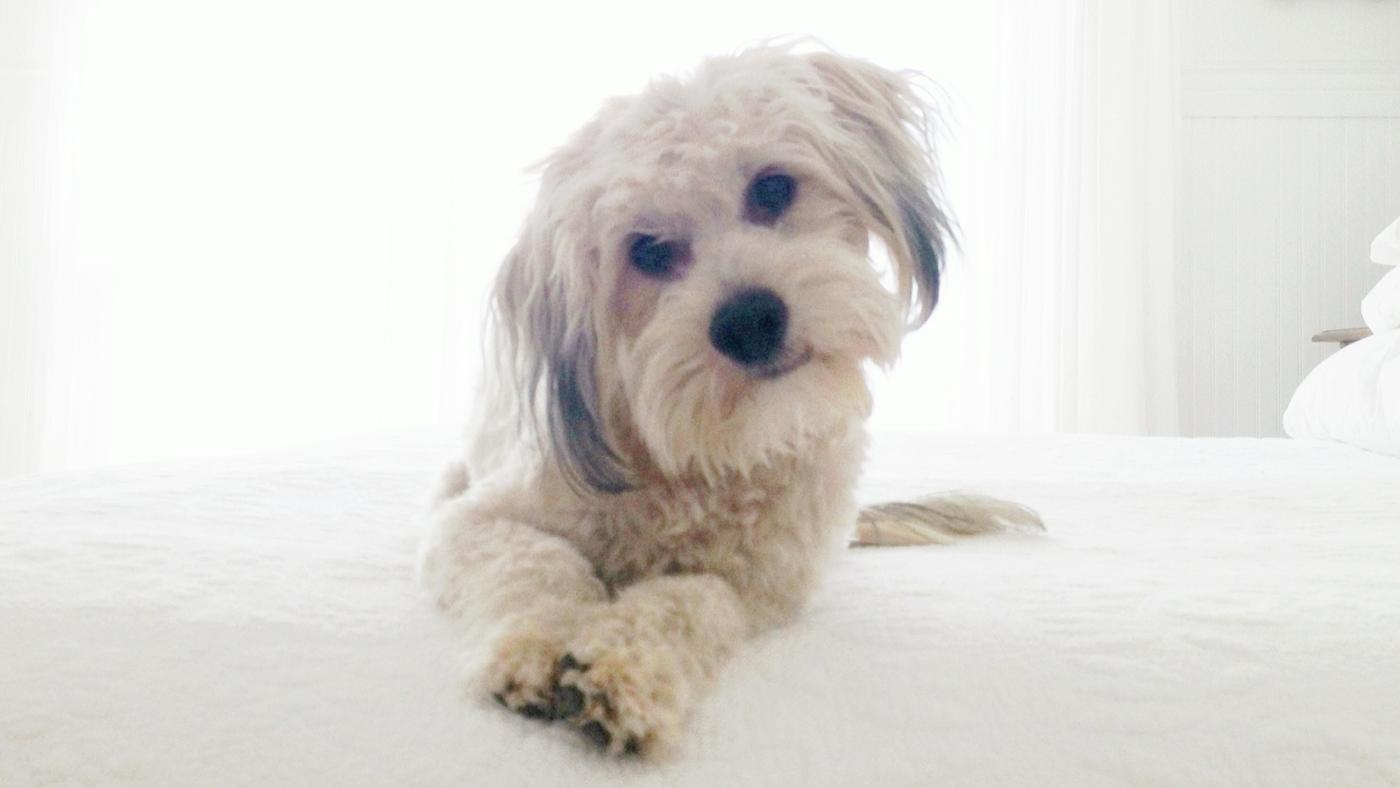 What Causes Constipation in Dogs?