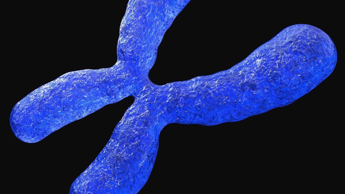 Why Are Chromosomes Important?
