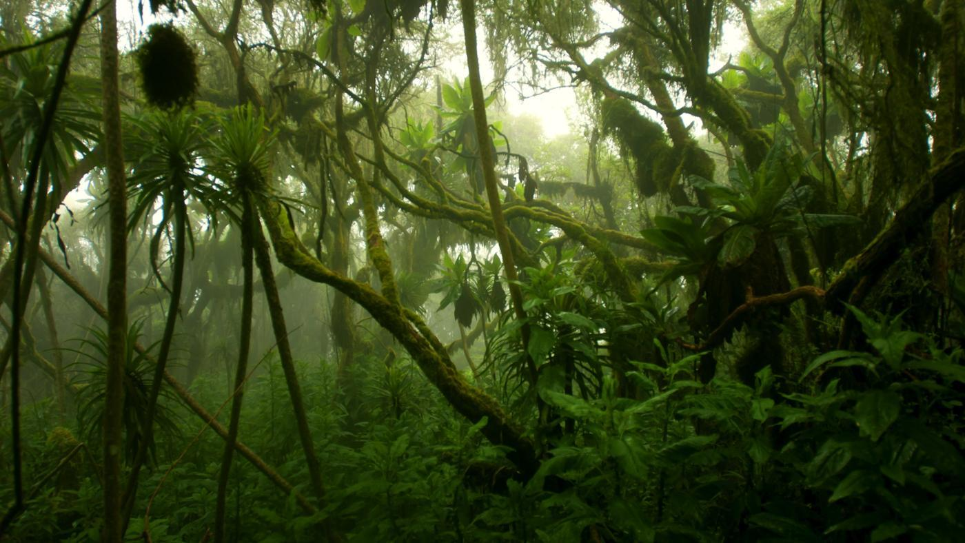 What Is the Climate of the Congo Rainforest Like?