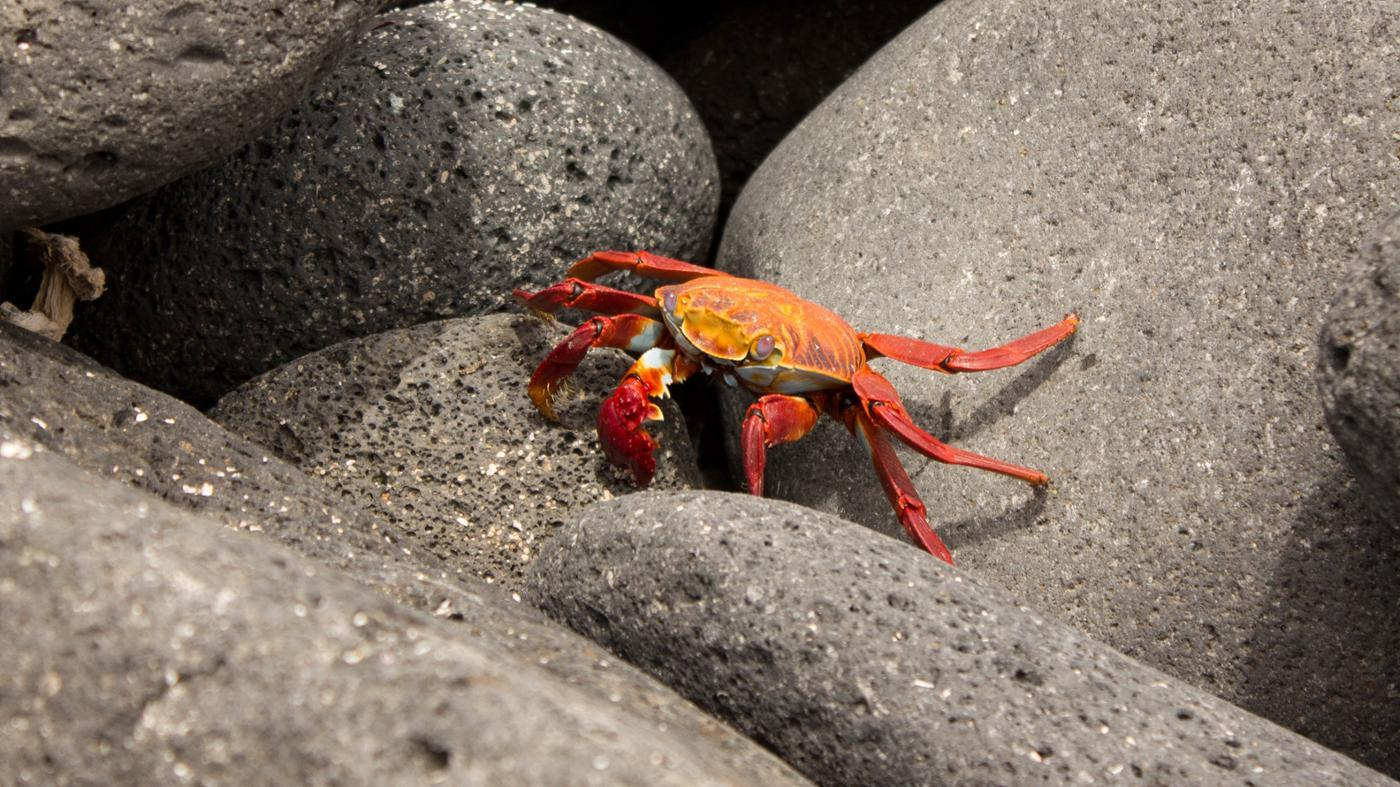 How Do Crabs Protect Themselves?