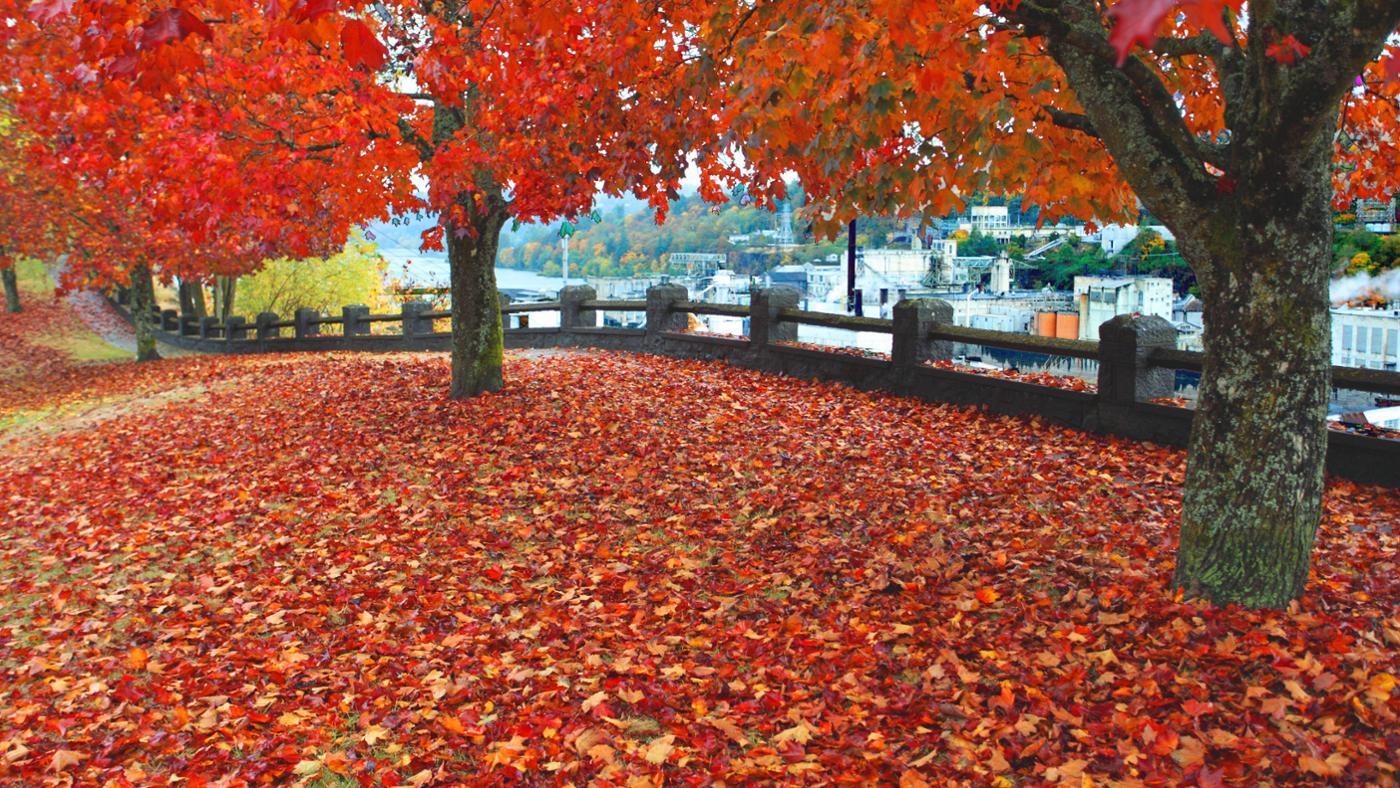 How Do You Describe Autumn?