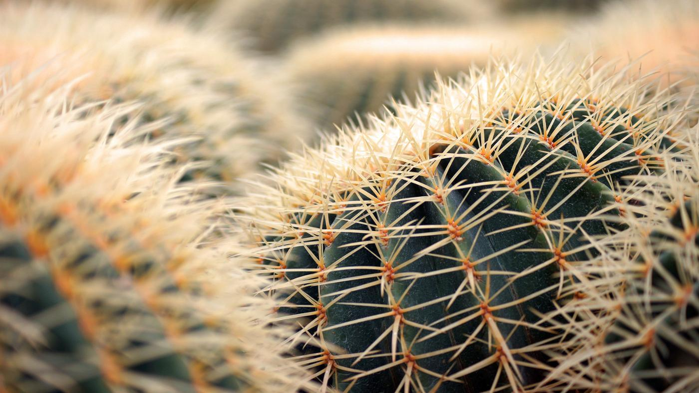 What Are Some Desert Plants?