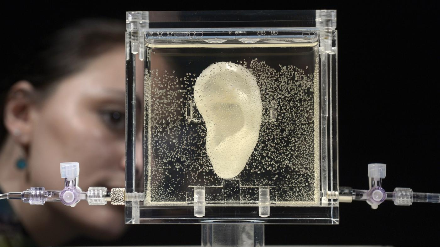 Did Leonardo Da Vinci Cut Off His Ear?
