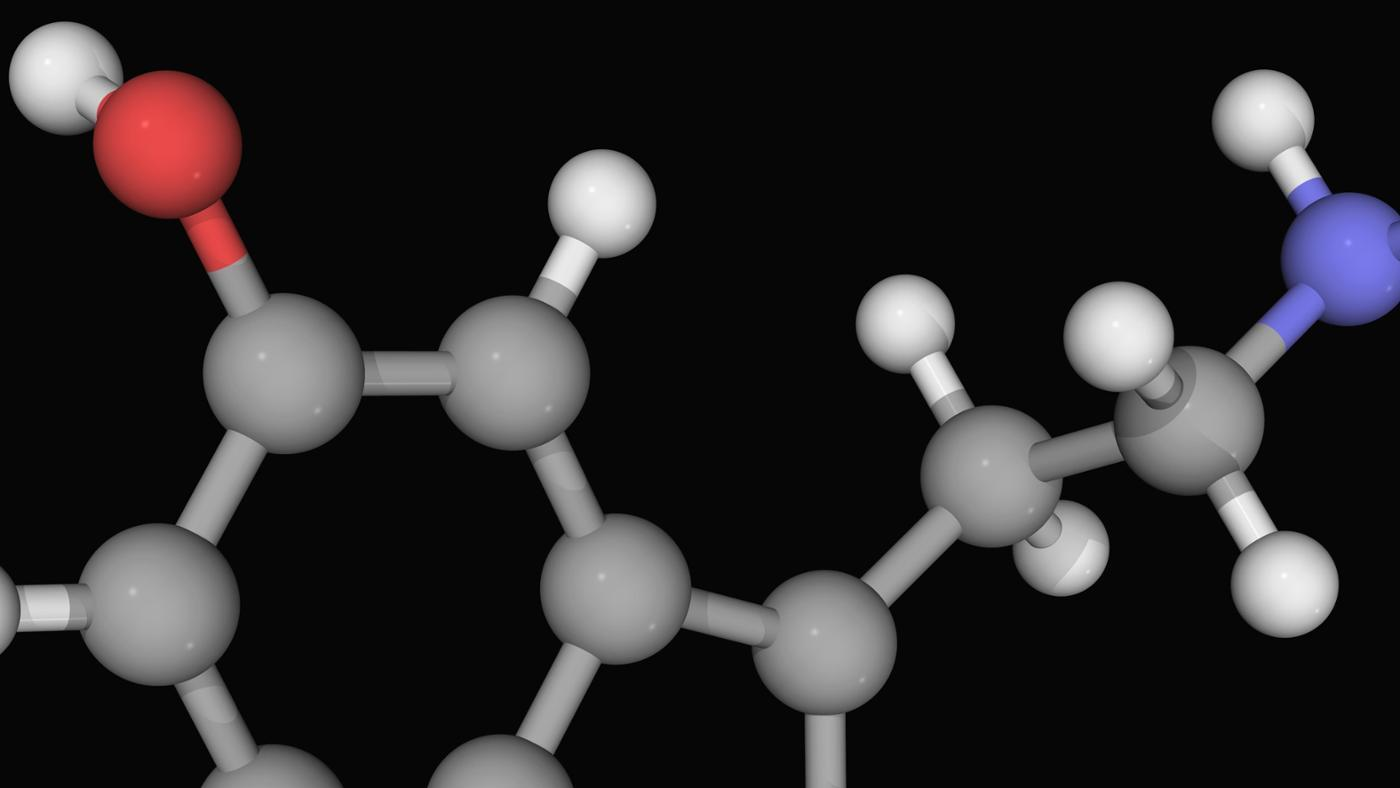 What Is the Difference Between Dopamine and Serotonin?