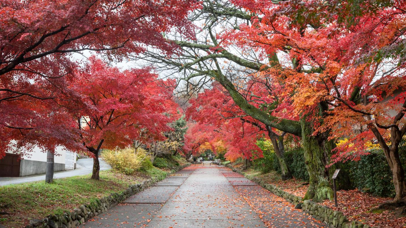 What Are the Different Types of Maple Trees?