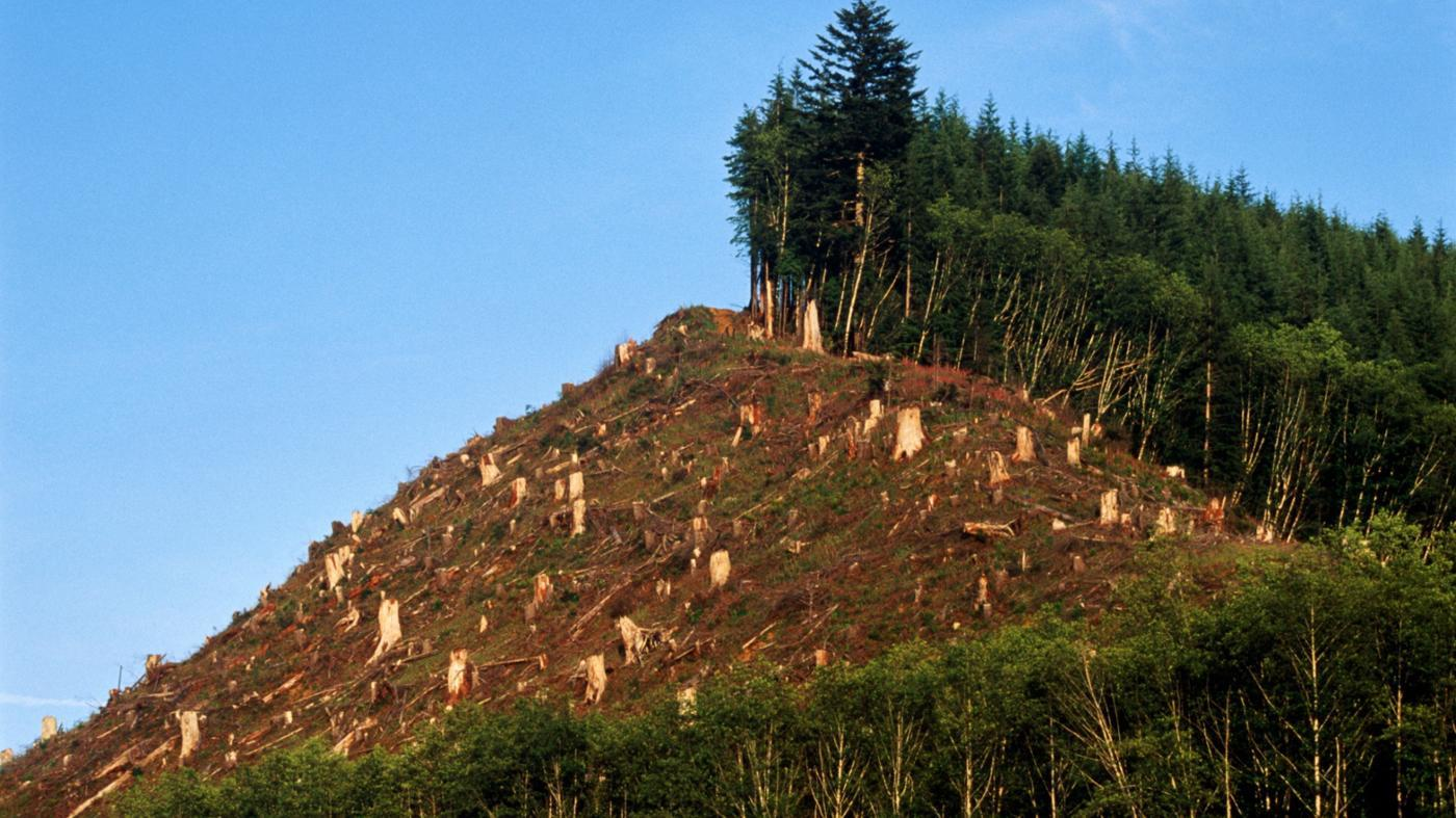 What Are Some Disadvantages of Deforestation?