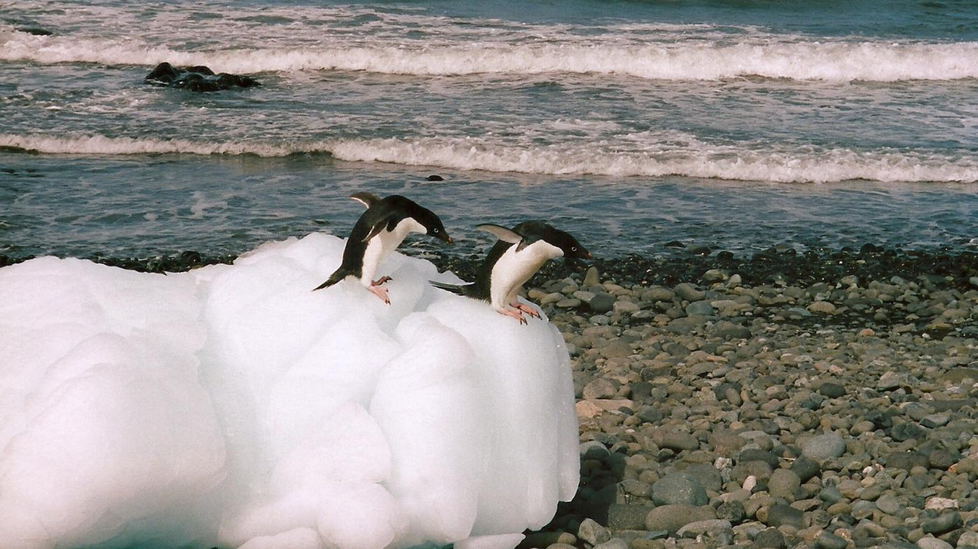 Do Penguins Migrate?