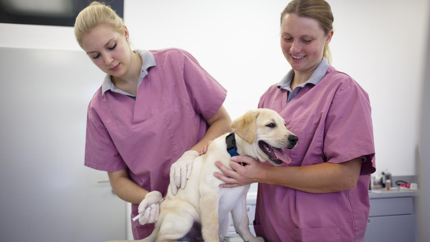 How Often Do Dogs Need Distemper Shots?