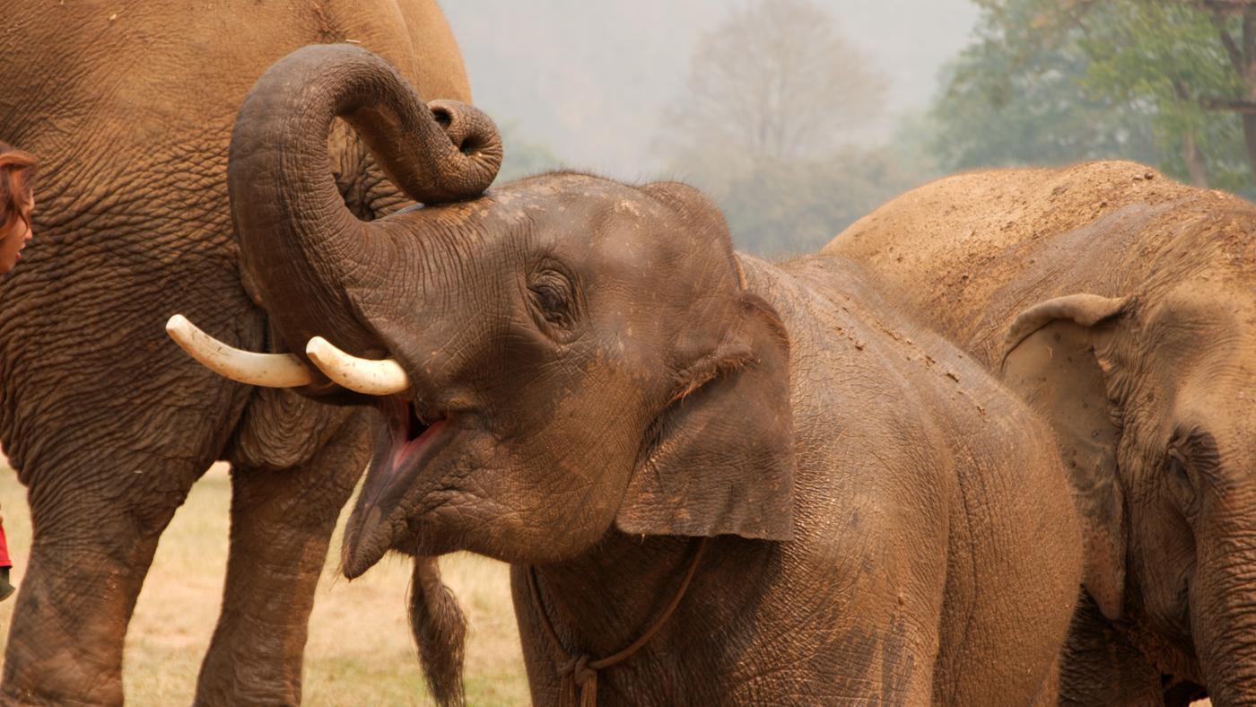 Where Do Elephants Live?
