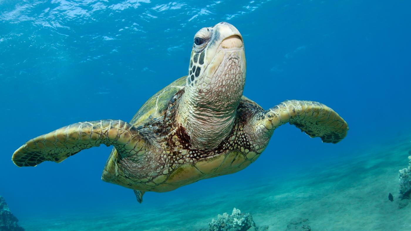 What Endangered Species Are in the Ocean Biome?