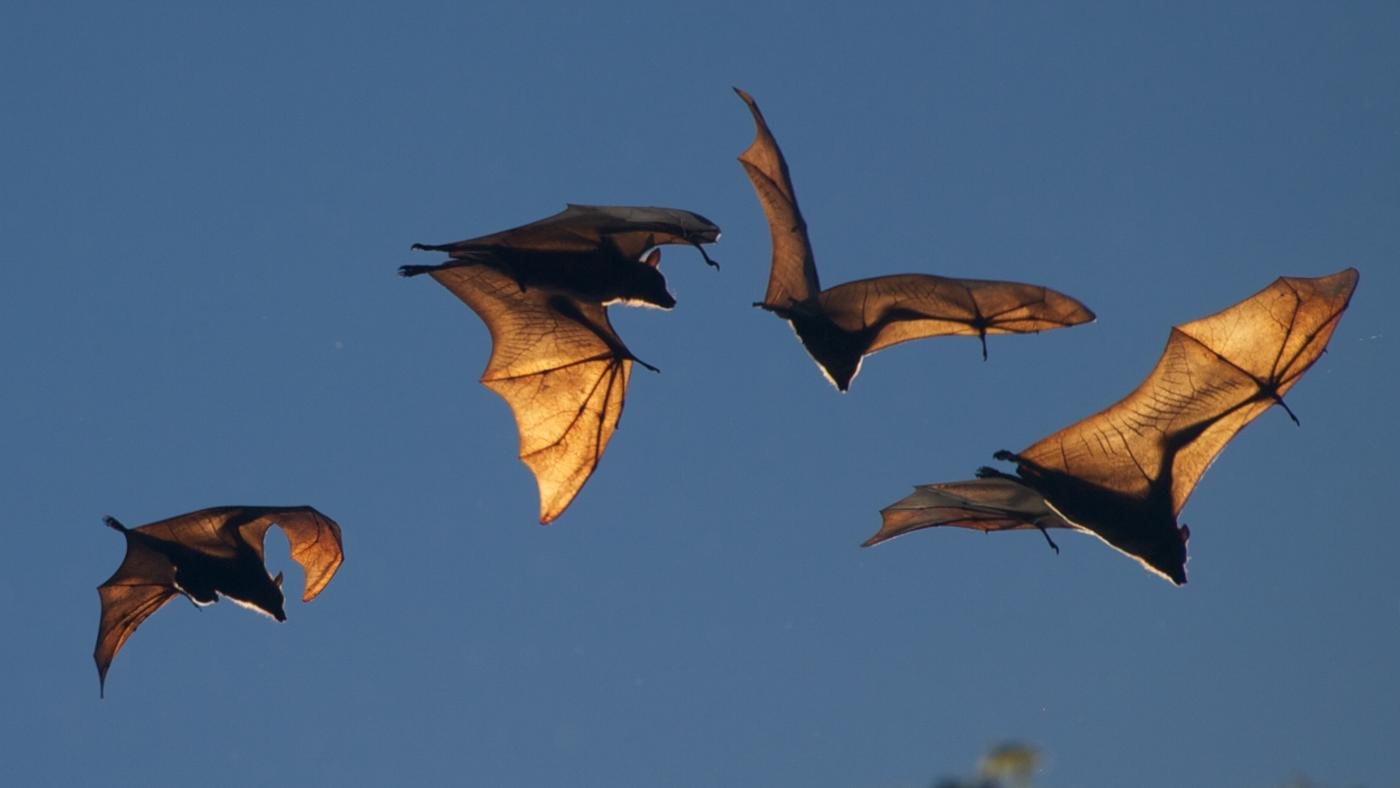 Who Are the Enemies of Bats?